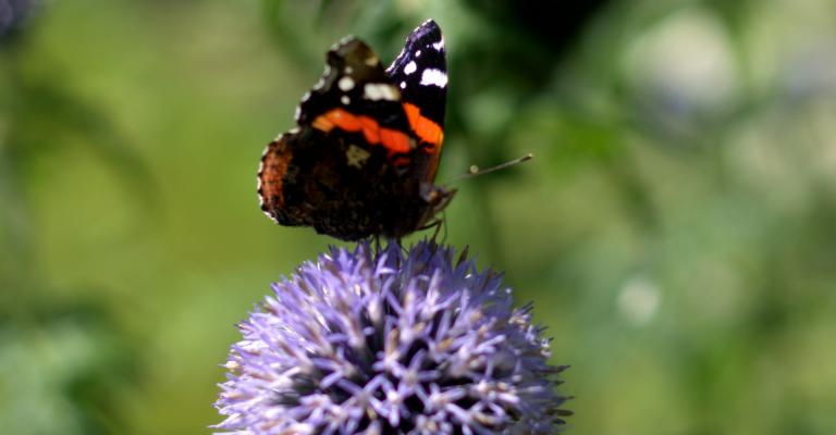 vlinder, vrijheid, transformatie