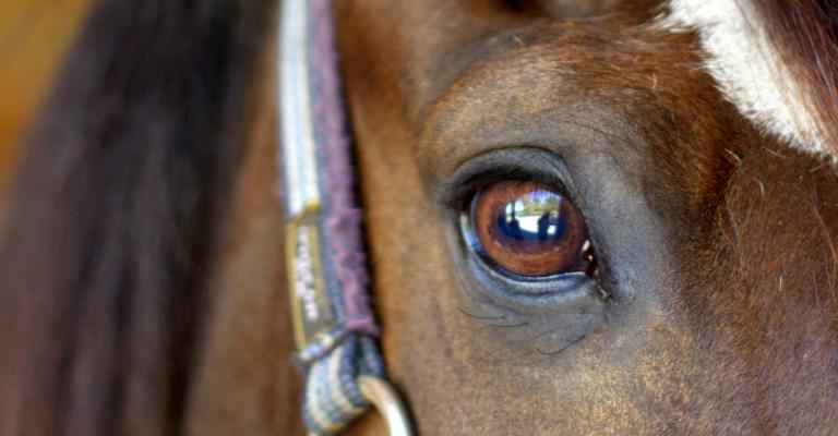 weerspiegeling in paardenoog