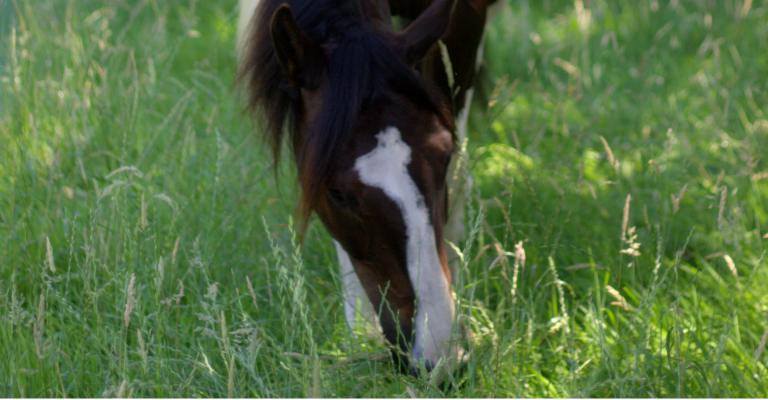 wijsheid van paarden