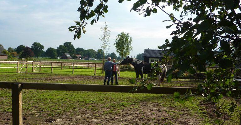 begeleiden met paarden